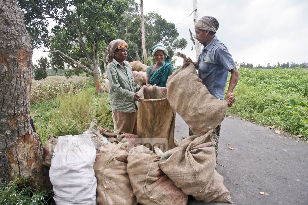 Farmers fill up burlap sacks with corn from their fields. Photo: tanvir ahammed