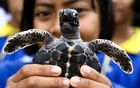 A well-wisher holds a sea turtle at the Sea Turtle Conservation Center as part of the celebrations for the upcoming 65th birthday of Thai King Maha Vajiralongkorn Bodindradebayavarangkun, in Sattahip district, Chonburi province, Thailand, Jul 26, 2017. Reuters