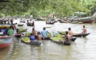 Big and small boats gather to trade guavas on Kirtipasha canal of Jhalakathi's Bhimruli village. Photo: asif mahmud ove