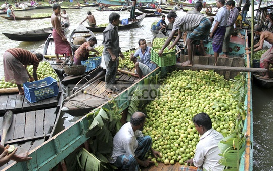 Farmers load guavas onto a bigger boat by wholesale traders at Jhalakathi. Photo: asif mahmud ove