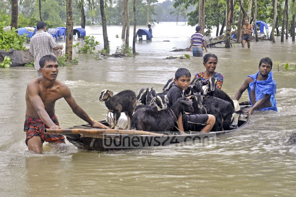 A family tries to move their goats to safety as water continues to rise in Dinajpur's Punarbhaba River on Sunday.