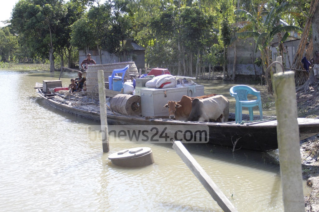 A family, along with their cattle, sets out for home as floodwaters recede in Jamalpur's Islampur Upazila. Photo: asif mahmud ove