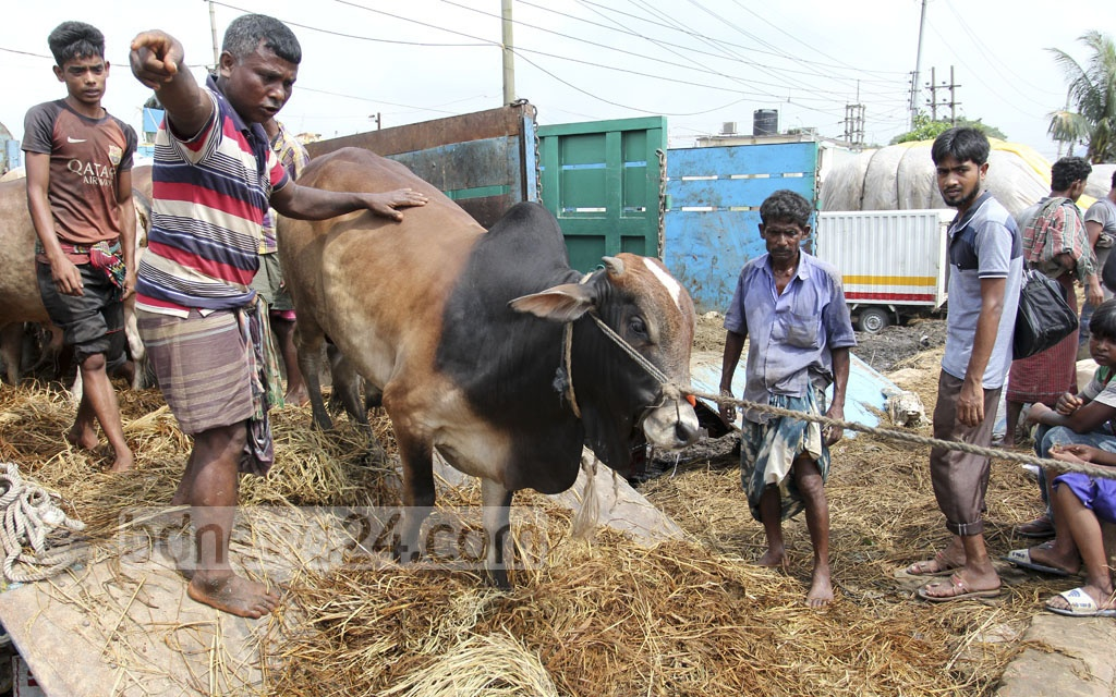 Traders are unloading their sacrificial animals from a truck at the Gabtoli market on Saturday ahead of Eid-ul-Azha. Photo: asif mahmud ove