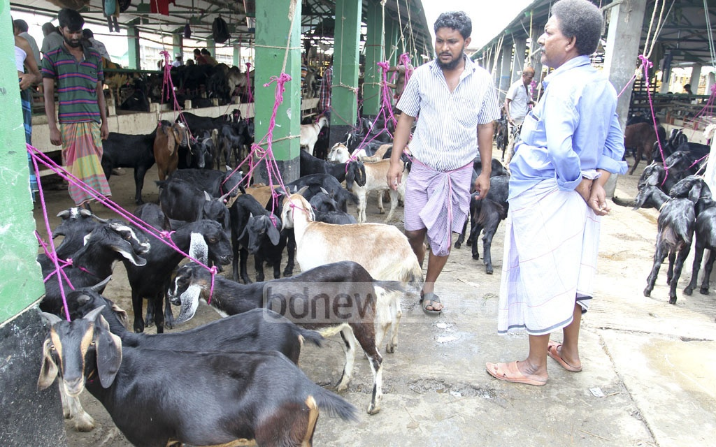 Goats are on sale at the Gabtoli Cattle Market on Saturday ahead of Eid-ul-Azha. Photo: asif mahmud ove