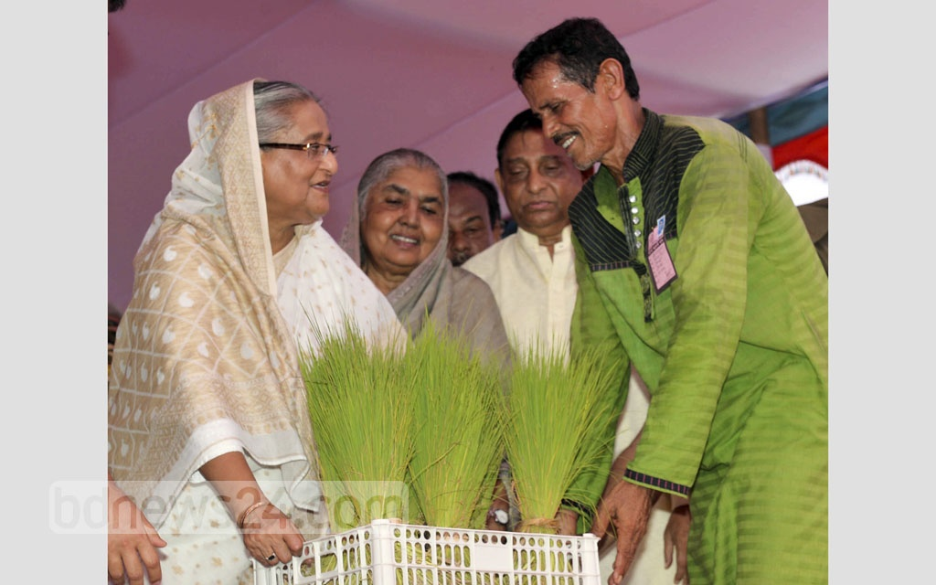 Prime Minister Sheikh Hasina distributing paddy saplings to flood-affected farmers in the northern district of Gaibandha on Saturday.