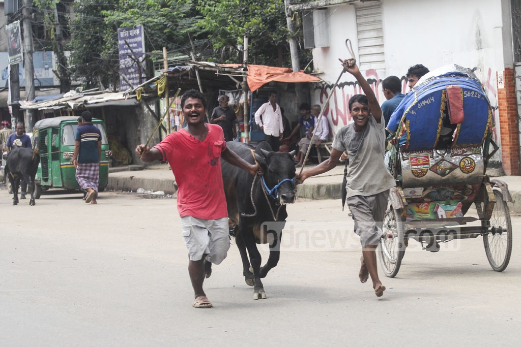 Customers returning home with sacrificial animals from Gabtoli Cattle Market on Friday, a day before the Eid. Photo: asif mahmud ove