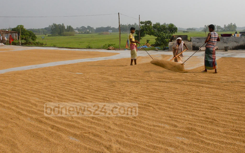 A worker is paid Tk 8,000 monthly for working in a barn, next to the Dhaka-Mawa Highway. The workers there have migrated from Burimari in Lalmonirhat. Photo: tanvir ahammed