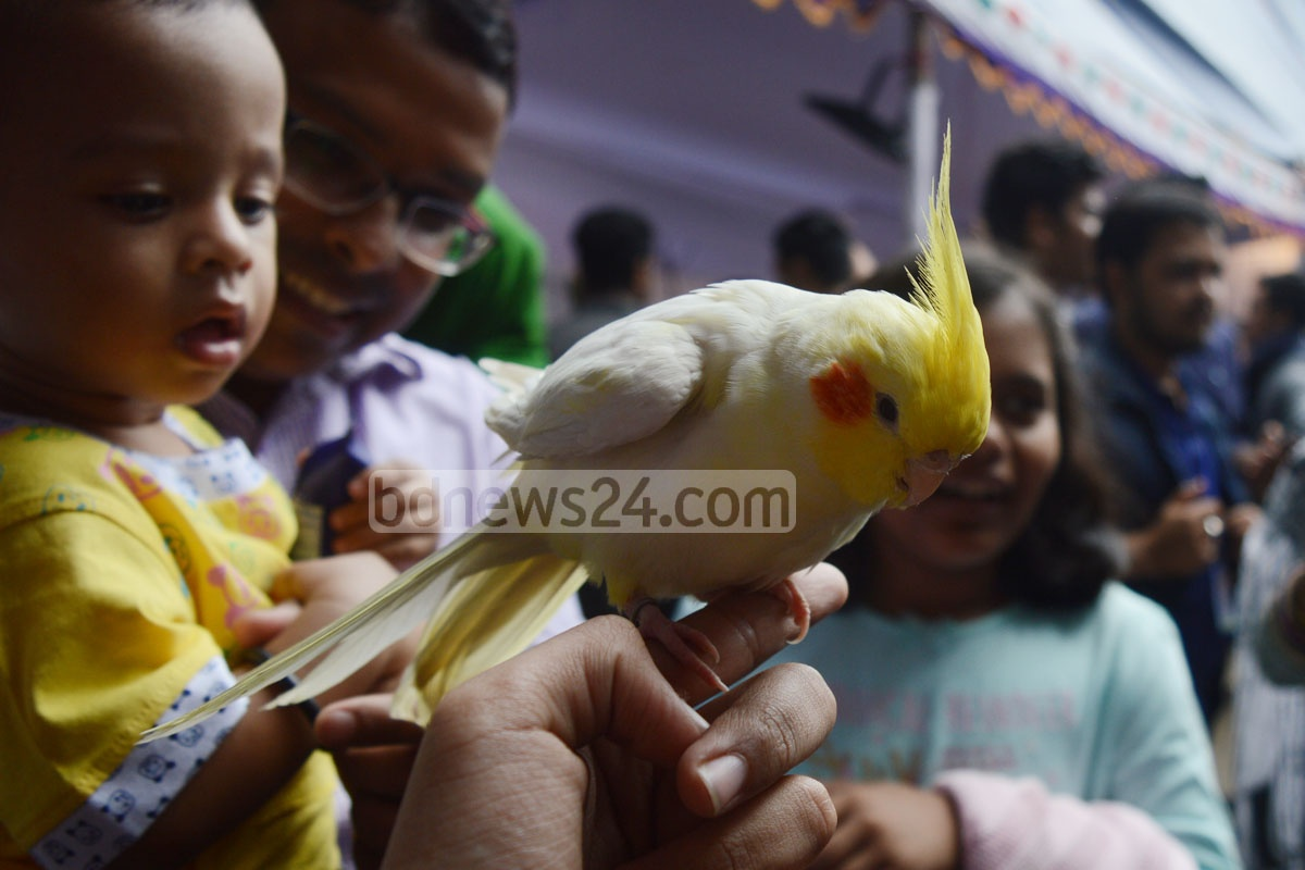 A child playing with a white parrot at the pet bird exhibition in Chittagong Veterinary and Animal Sciences University on Saturday. Photo: sumon babu