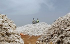 Farmers work at a cotton market in Soungalodaga village near Bobo-Dioulasso, Burkina Faso March 8, 2017. Picture taken March 8, 2017. Reuters