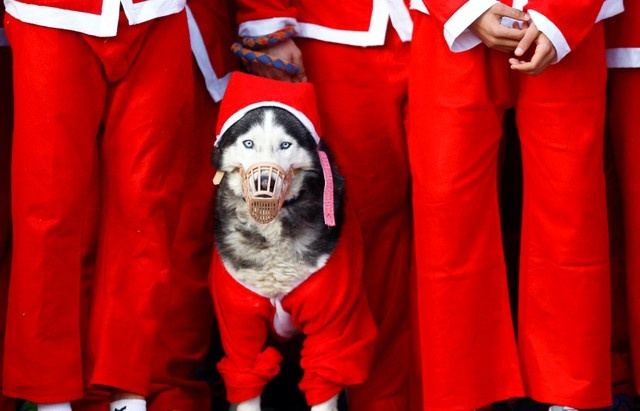A dog dressed as Santa Claus takes part in the annual city race in Skopje, Macedonia December 24, 2017.REUTERS