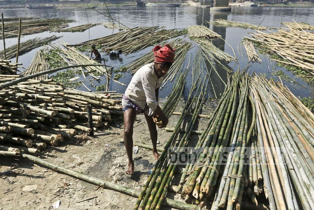 A worker is pulling up bamboos from the river.