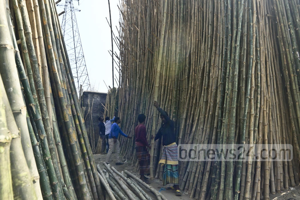 Thousands of bamboos are on display for sale.