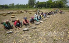 Farm workers busy harvesting potatoes in the neighbourhood of Ichhapura in Sirajdikhan, Munshiganj. The labourers who came from Rajshahi to work in Munshiganj are paid by the day. Photo: mostafigur rahman