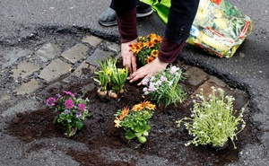 Brussels resident Anton Schuurmans plants flowers in an unrepaired pothole to draw attention to the bad state of public roads in Brussels, Belgium April 5, 2018. Reuters