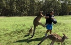 A man is attacked by kangaroos after feeding them near Morisset Park, Australia in this undated photo obtained from social media. Kroosn Shuttle Service Pty Ltd/via REUTERS