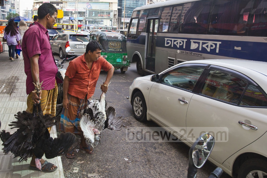 Two poultry traders carrying turkeys wait for buyers at Dhaka's Gulshan-1 intersection on Sunday. They were charging Tk 6,000 for a pair of turkeys. Photo: Mostafigur Rahman