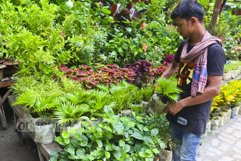 Not a fully-fledged nursery, but different plants are available on the pavements in Doyel Chattar area of the Dhaka University. Photo: Abdullah Al Momin