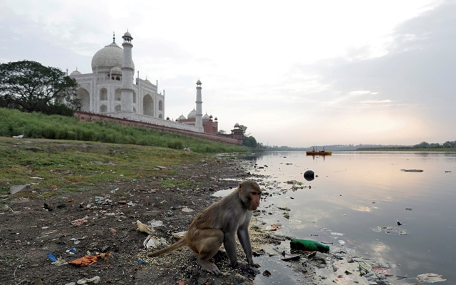 Photo caption: A monkey looks for eatables on the polluted banks of the Yamuna river next to the historic Taj Mahal in Agra, India, May 19, 2018. Reuters