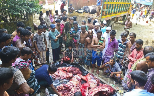 A cow brought from Jhenaidah died three days after arrival in Dhaka. Another cow brought to Dhaka in the same truck fell sick and was later slaughtered. Its meat was on sale at Dhupkhola Cattle Market. Photo: Abdullah Al Momin