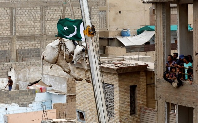 FILE PHOTO: Residents watch as a sacrificial cow is lowered from a rooftop by crane, ahead of the Eid-ul-Azha festival in Karachi, Pakistan, August 12, 2018. Reuters