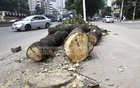 Locals say the government could take alternative measures without cutting down trees. Photo: Mahmud Zaman Ovi