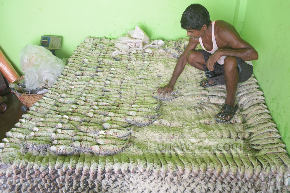 The supply of hilsa is abundant. Fish traders preserve a large quantity of hilsa with salt at Chattogram's Firingibazar for the lean season. Photo: Suman Babu