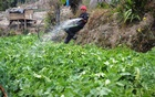 A farmer tends to his organic vegetable plot in the Himalayan state of Sikkim, India. TRF/Athar Parvaiz via Reuters