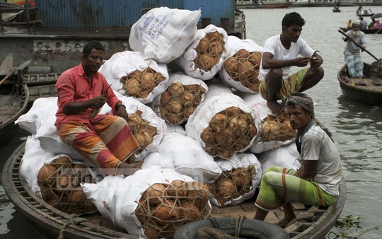 A boat teeming with coconuts is anchored at the Old Dhaka's Badamtali Ghat on Friday. These coconuts from Barishal are destined for the wholesale stores in Shyambazar. Photo: Asif Mahmud Ove