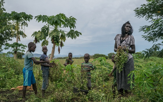 Queen Chandia, a South Sudanese refugee who cares for 22 children, harvests groundnuts on land she has been lent to her by local residents, in a refugee settlement in Oliji, Uganda, Oct 15, 2018. The New York Times