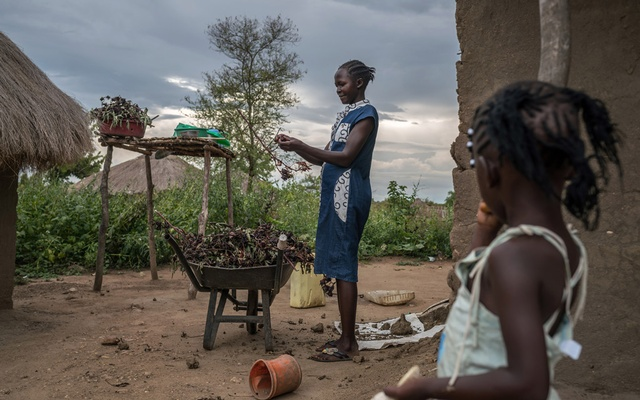 Agnes Ajonye, a refugee from South Sudan, gathers hibiscus leaves for tea in a refugee settlement in Ofua in north-western Uganda, Oct 17, 2018. The New York Times