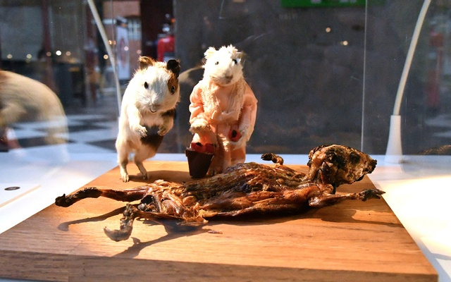 Guinea pigs, served as a traditional Peruvian Andes food, are displayed at the Disgusting Food Museum in Malmo, Sweden November 1, 2018. Reuters