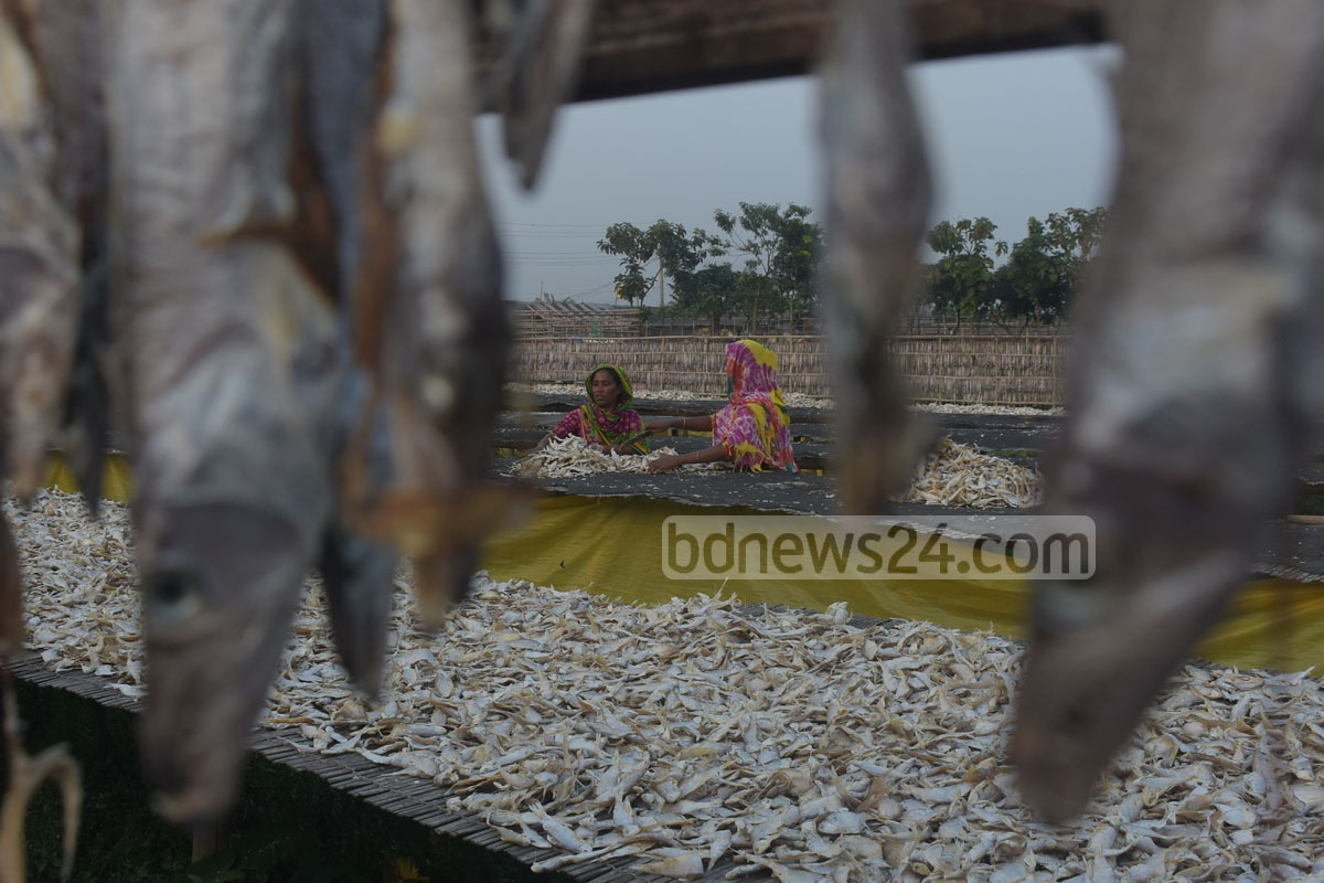 Workers drying fish at the Notun Bridge area in Chattogram's Karnaphuli on Tuesday. Photo: Suman Babu