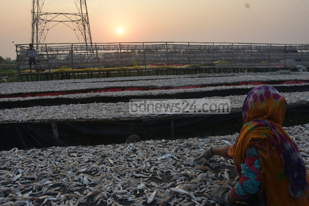 Fish kept for drying at the Notun Bridge area in Chattogram's Karnaphuli on Tuesday. Photo: Suman Babu