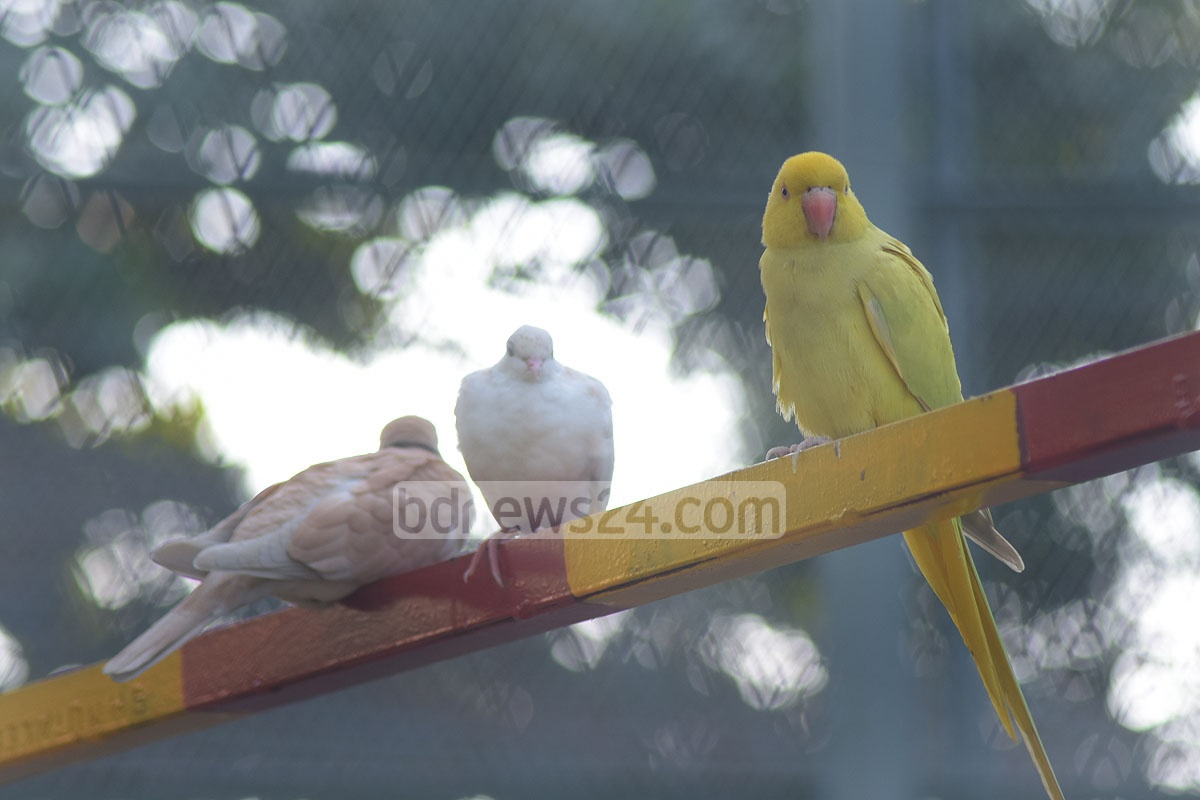 An aviary with over 300 birds of six species wad opened to the public on Wednesday after its construction at a cost of 3.3 million at Chattogram Zoo. Photo: Suman Babu