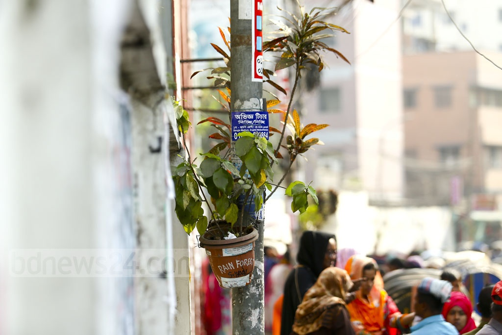 Rainforest School planted more than 700 flowering and medicinal trees in nearby areas, including Bakshibazar, Hossaini Dalan and Nazimuddin Road in Old Dhaka. Photo: Mahmud Zaman Ovi