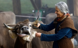 Claudia, wife of Armin Capaul the horned cow initiative (Hornkuh-Initiative) founder, cleans a cow ahead of a national vote on November 25, at the Valengiron farm in Perrefitte near Moutier, Switzerland, November 15, 2018. Reuters
