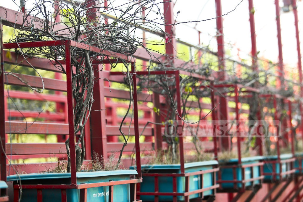 Plants put on Dhaka's footbridges under an environment and forest ministry project for fresh air and sustainable environment are dying from a lack of care. This photo was taken on Friday. Photo: Mahmud Zaman Ovi