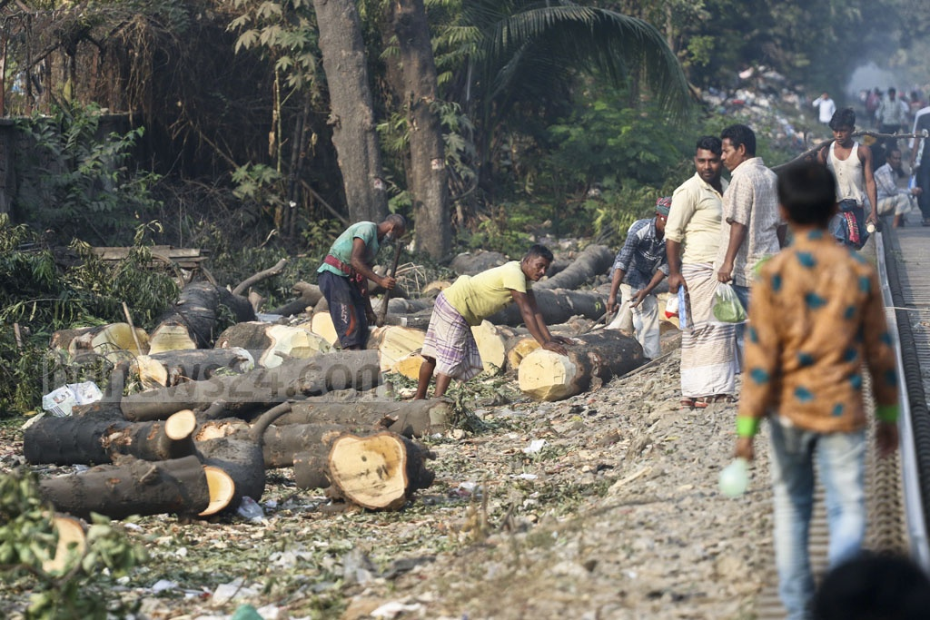 Workers remove the trunks of felled trees in Dhaka. Photo: Abdullah Al Momin