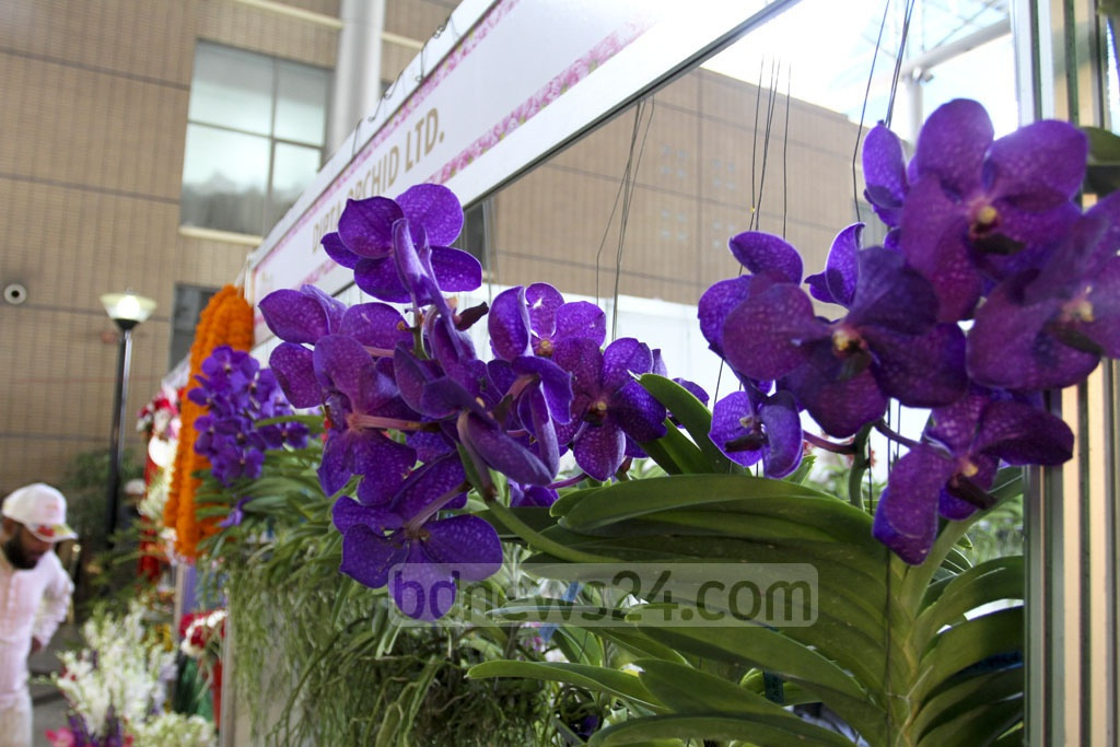 Orchid flowers on display at the International Flower Exhibition and Conference 2018 at the Bangabandhu International Conference Centre on Friday. Photo: Asif Mahmud Ove