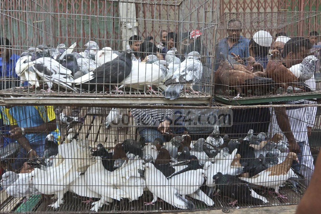 Pigeons are sold for Tk 200 – Tk 10,000 at Dhaka's Kaptanbazar market. Photo: Abdullah Al Momin
