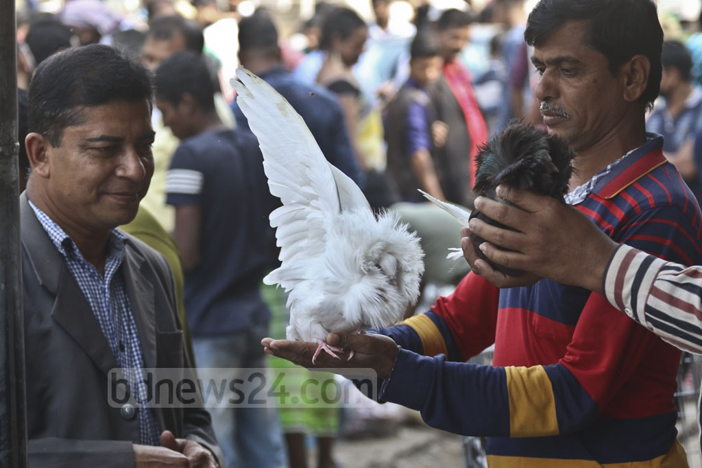 Jacobin pigeons are sold for Tk 4,000 to Tk 5,000. Photo: Abdullah Al Momin