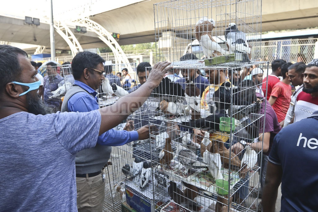 Buyers look at pigeons at Dhaka's Kaptanbazar market. Photo: Abdullah Al Momin