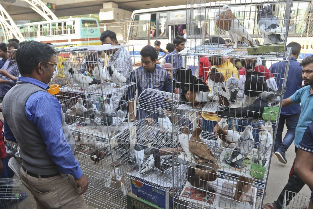 Sellers bring various breeds of pigeon to the market. Photo: Abdullah Al Momin