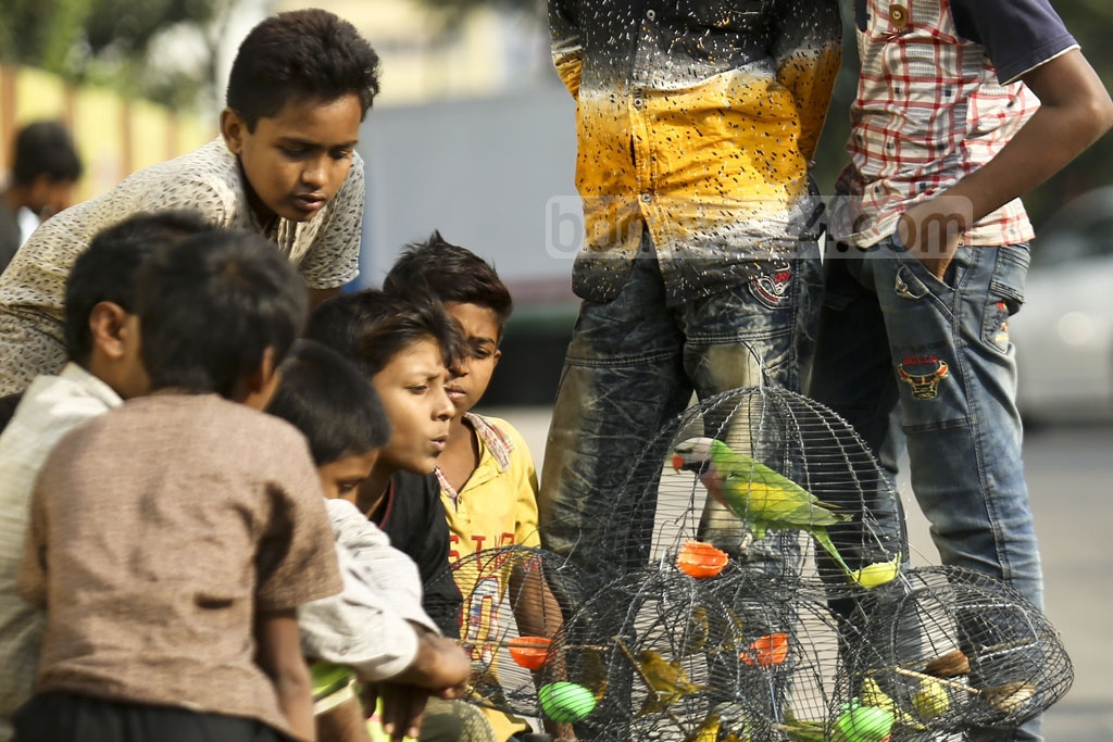 Children gather excitedly around a bird trader and his wares in Dhaka's Gulshan. Photo: Mahmud Zaman Ovi