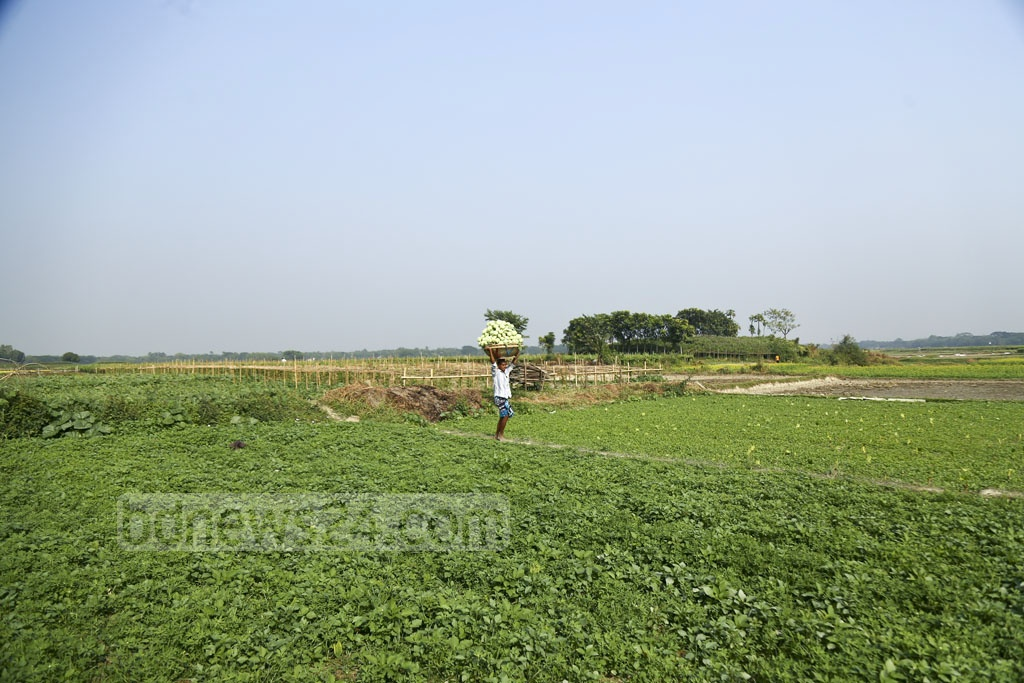 A farmer returns from the field with his harvest of turnips. Photo: Mahmud Zaman Ovi