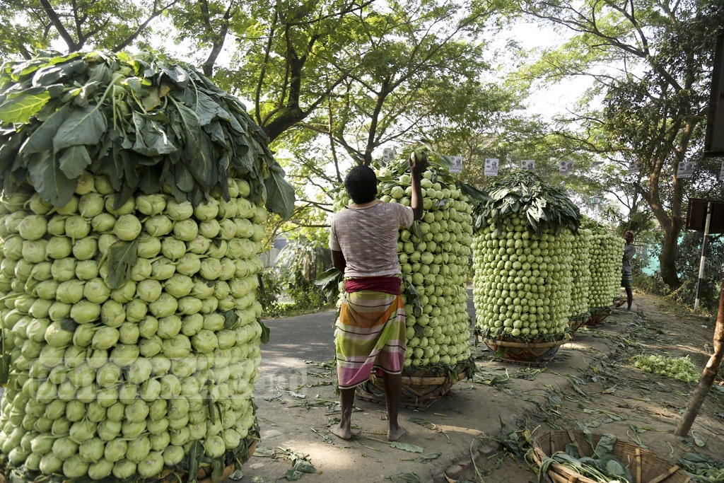 Farmers prepare to take their turnips to market at Keraniganj's Jagannathpur. Photo: Mahmud Zaman Ovi