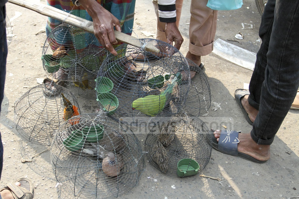 A street vendor is seen selling green parrots and spotted doves in Dhaka's Gulistan, despite the legal bar on selling wild birds as pets. Photo: Asif Mahmud Ove