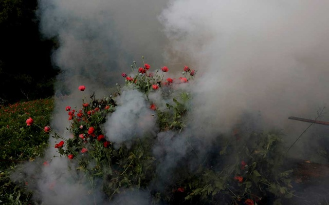 Soldiers burn an illegal opium plantation near Pueblo Viejo in the Sierra Madre del Sur, in the southern state of Guerrero, Mexico, August 25, 2018. REUTERS/Carlos Jasso