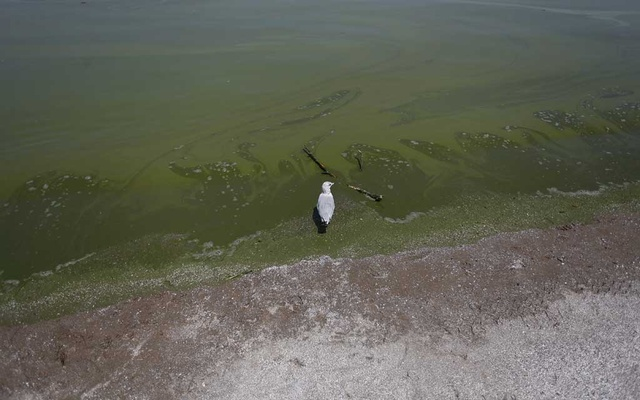 FILE — A seagull watches as algae-infested water from Lake Erie washes up on the shore at Maumee Bay State Park public beach in Oregon, Ohio, Aug 4, 2014. A smart move by President-elect Donald Trump would be to kickstart an awe-inspiring public works project that Americans could be proud of, and that would repay the investment many times over for generations to come. (Joshua Lott/The New York Times)