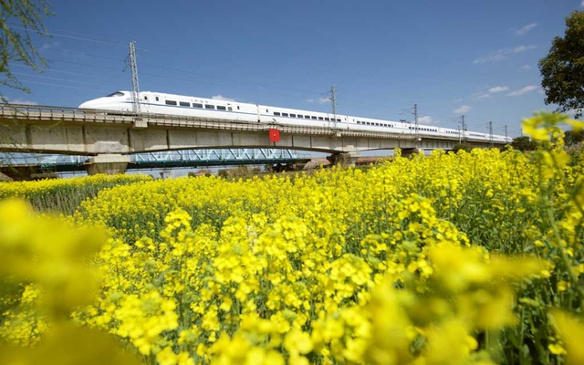 A high-speed bullet train travels past a rapeseed or canola field in Haian, Jiangsu province, China March 22, 2019. REUTERS
